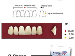 DIENTES NEWCRYL-VITA 2D UP A2