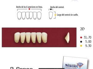 DIENTES NEWCRYL-VITA 2D LO B2